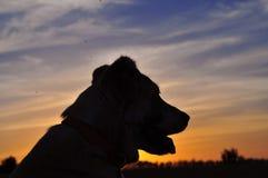 cane bianco Rosso che si siede su un campo verde, erba verde Porto animale Immagini Stock