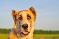 cane bianco Rosso che si siede su un campo verde, erba verde Porto animale Fotografie Stock Libere da Diritti