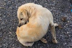 Cane bianco sulla terra della ghiaia fotografia stock libera da diritti