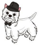 Cane in black hat e nell'arco Immagine Stock