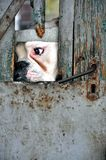 Cane bloccato fotografie stock