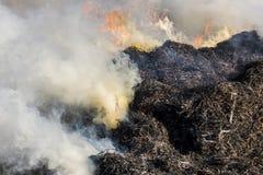 Cane Burning Giethoorn Holland royalty-vrije stock fotografie