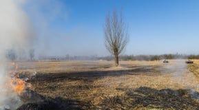 Cane Burning op Reed Field Giethoorn royalty-vrije stock fotografie