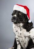 Cane in cappello del Babbo Natale fotografia stock libera da diritti