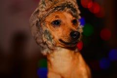 Cane in cappello di inverno Fotografie Stock Libere da Diritti