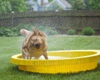 Cane che agita fuori acqua Immagine Stock