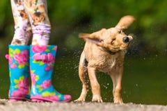 Cane che agita fuori dall'acqua Immagini Stock Libere da Diritti