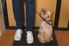 Cane che aspetta una passeggiata Immagine Stock