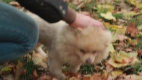 Cane che cammina nel parco archivi video