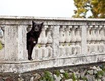 Cane che custodice la proprietà del castello fotografie stock