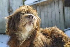 Cane che custodice la sua iarda Fotografie Stock