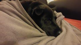 Cane che dorme nella coperta Fotografia Stock Libera da Diritti