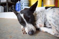 Cane che dorme sul pavimento Fotografia Stock Libera da Diritti