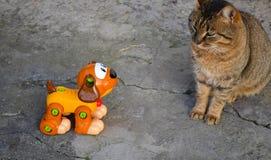 Cane che esamina gatto immagini stock libere da diritti