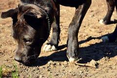Cane che fiuta nel frutteto al sole, colore Fotografia Stock