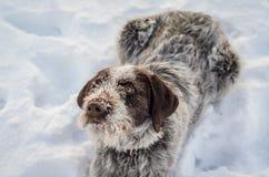 Cane che gioca nella neve Fotografie Stock