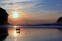 Cane che gioca sulla spiaggia di sera in Cornovaglia Immagini Stock