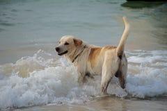 Cane che gode del sole alla spiaggia Fotografie Stock