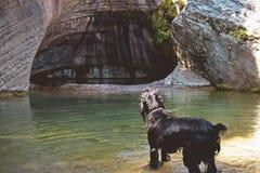Cane che guarda all'acqua Fotografie Stock Libere da Diritti