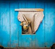 Cane che guarda fuori Fotografie Stock