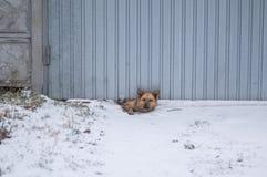 Cane che guarda fuori dal foro che ha fatto nell'ambito dei portoni per nella la custodia più esperta fotografia stock