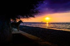 Cane che guarda il tramonto epico dell'oceano Immagine Stock