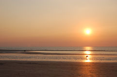 Cane che guarda tramonto? Fotografie Stock Libere da Diritti