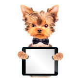 Cane che indossa un arco del collo con il pc della compressa Immagine Stock