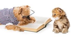 Cane che legge un piccolo gattino del libro Fotografia Stock Libera da Diritti