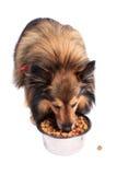 Cane che mangia alimento da una ciotola Fotografia Stock