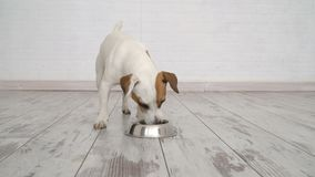 Cane che mangia alimento dalla ciotola video d archivio
