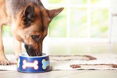 Cane che mangia dalla ciotola Immagini Stock Libere da Diritti