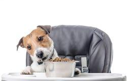 Cane che mangia il pranzo asciutto dell'alimento dalla ciotola Fotografie Stock