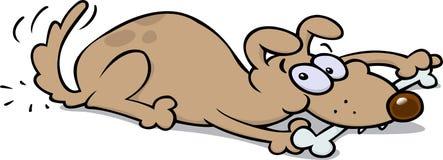 Cane che mangia un osso Fotografie Stock