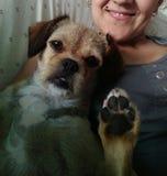 Cane che ondeggia con la sua zampa fotografia stock