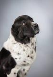 Cane che osserva in su fotografie stock libere da diritti