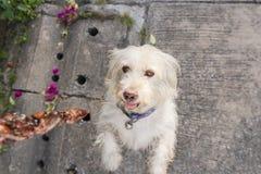 Cane che ottiene alimento dal proprietario alla via Fuoco sul cane fotografie stock