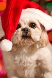 Cane che porta il cappello della Santa Fotografia Stock