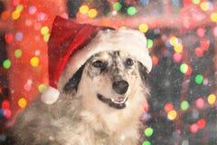 Cane che porta il cappello di Santa in neve Fotografia Stock