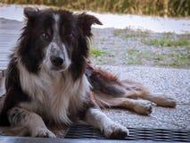 Cane che riposa davanti alla porta Immagini Stock Libere da Diritti