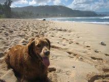 Cane che riposa sulla spiaggia Fotografie Stock Libere da Diritti
