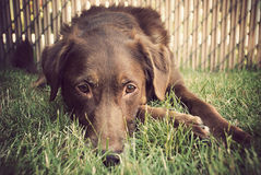 Cane che risiede nell'erba Fotografia Stock Libera da Diritti