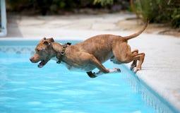 Cane che salta giù il lato dello stagno Fotografia Stock Libera da Diritti