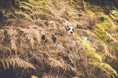 Cane che si nasconde dietro le foglie Fotografia Stock Libera da Diritti
