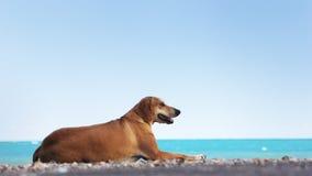 Cane che si rilassa alla spiaggia Immagine Stock Libera da Diritti