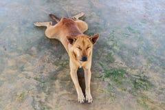 Cane che si rilassa sul pavimento del cemento fotografia stock libera da diritti
