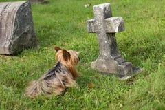 Cane che si riposa custodicendo la tomba del bambino immagini stock