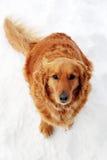 Cane che si siede alla neve Immagini Stock