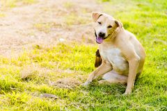 Cane che si siede felicemente nell'erba fotografia stock libera da diritti