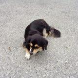 Cane che si siede sul marciapiede della pavimentazione immagine stock
